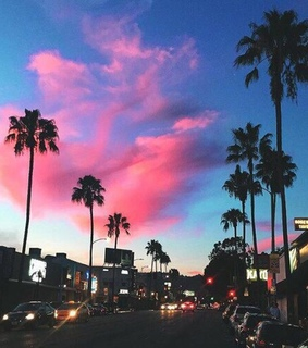 cars, palm trees and sky