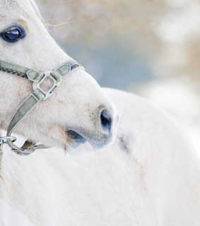 photography, animal and horse