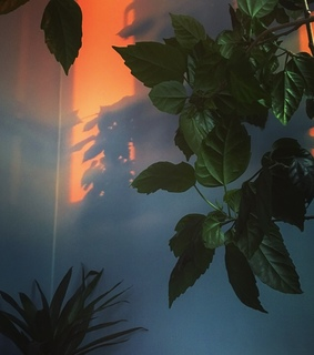 plant, shadow and sunset