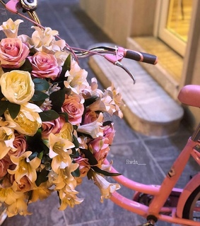 flower, roses and cycle
