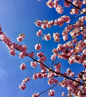 pink, sky and flower