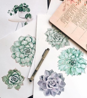 drawing, plant and illustrator