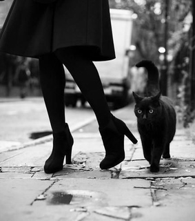 black cat, black and white and cats