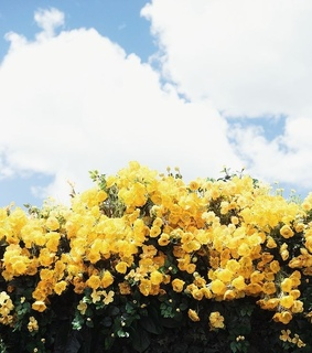 yellow, art and flowers