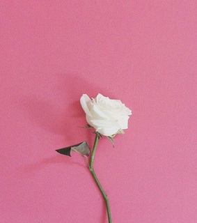 quotes, flowers and pink aesthetic