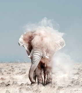 elephant and travel