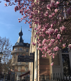 travel, france and flowers