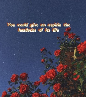 starts, red rose and aesthetic