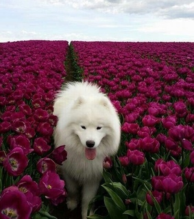white dog, travel and happiness