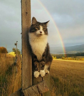 cat, wooden and pole