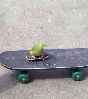inspiration, skate and cute