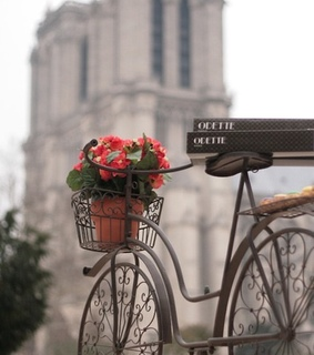 re roses, bicycle and building