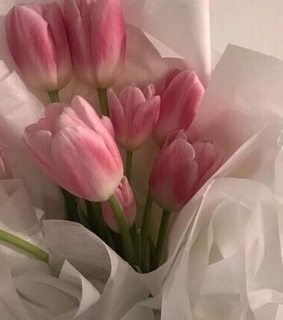 beautiful and pink tulips