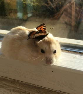 hamster, nature and butterfly