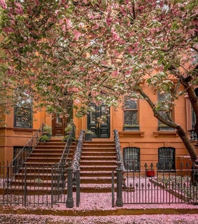 Brooklyn, dreamy and blooming