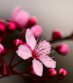blossom, cherry and floral
