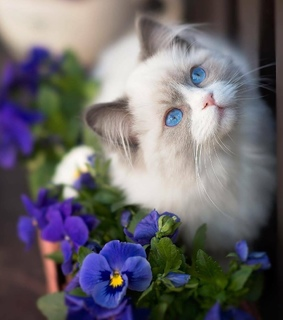 cute, beauty and flowers