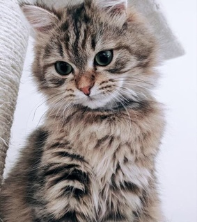cat, chat and cute