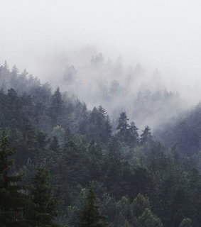 misty, nature and trees