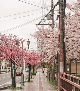 cherry blossoms, aesthetic and spring