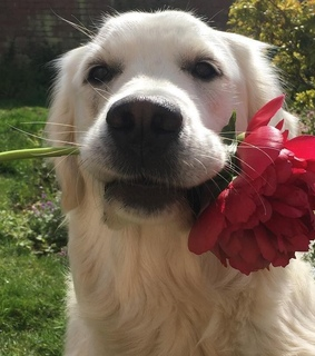 puppy, red flower and love