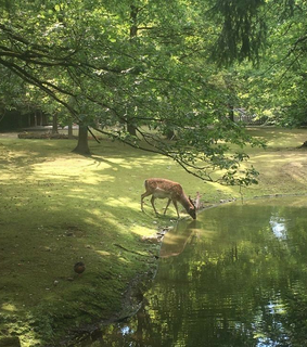 cottagecore, deer and nature