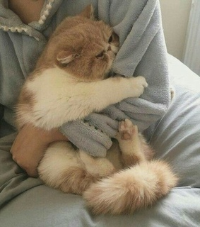 cats, cuddle and cute