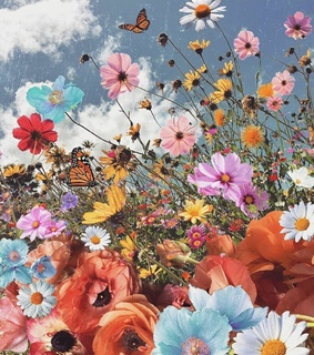 butterfly, colors and daisy