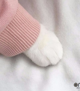 pink jumper and cat paw