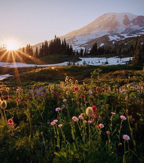 flowers, landscape and mountains