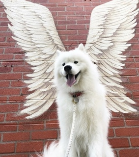 angel, animal and cutie