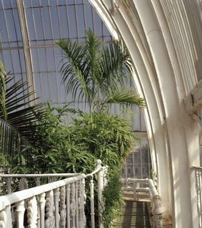 greenhouse, green and tumblr