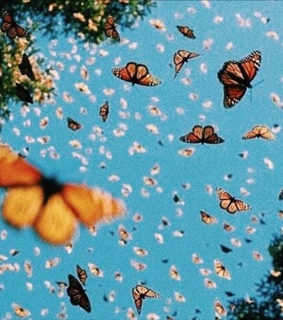 aesthetic, blue and butterflies