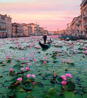 artist, blooming canals of venice and photographer