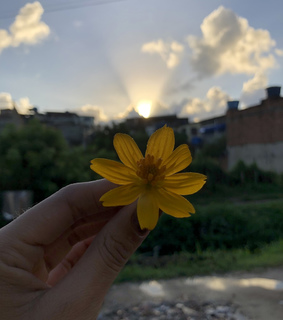 flowers, photography and morning