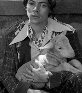 dreamy, Harry Styles and goat