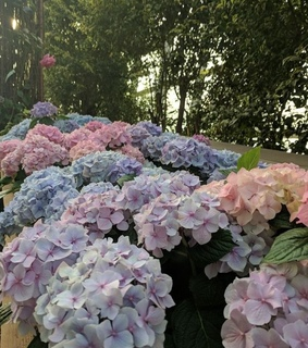 beautiful, blooming and colors