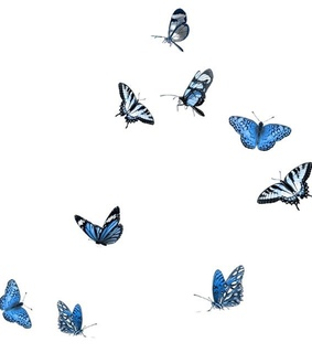 blue, butterflies and butterfly