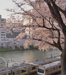 aesthetic, beautiful and cherry blossoms