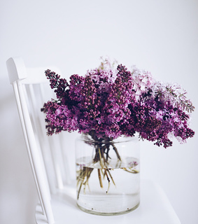 flowers, photography and spring