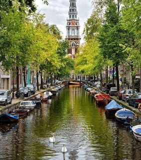 trees, spring and amsterdam