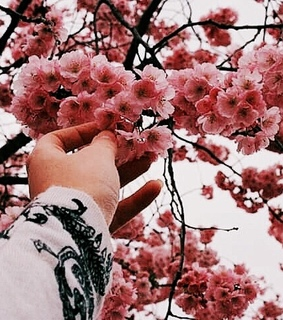flowers, aesthetic and filter