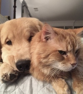 cat, friends and puppy