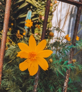 nature, photography and yellow