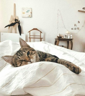 decoration, cat and tabby