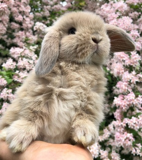 animals, rabbit and cute