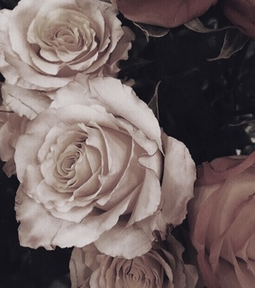 aesthetic, fashion and flowers