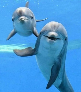 ocean, funny and dolphins