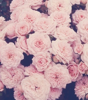 aesthetic, aesthetic flowers and flowers