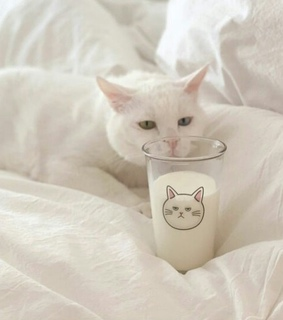 animal, cat and cute